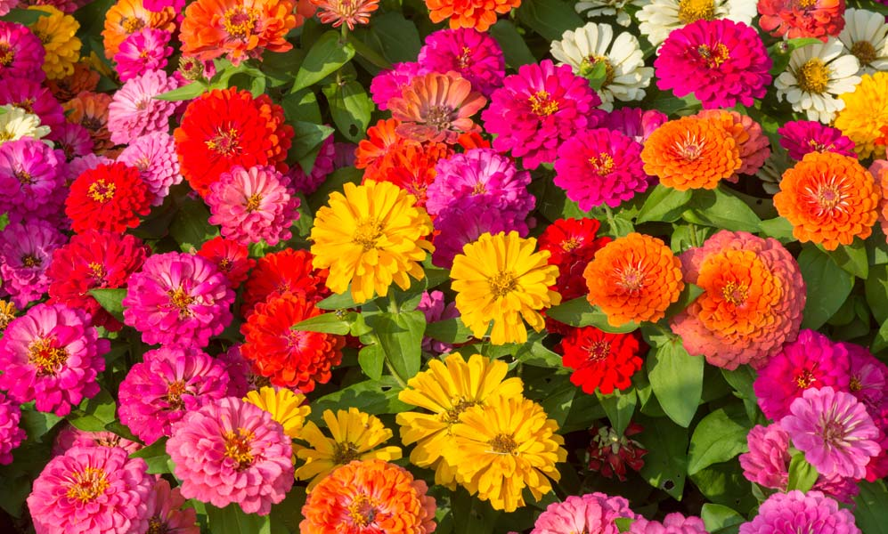 BEDDING PLANTS NOW AVAILABLE Let's get that garden looking nice and colourful - you'll be spending lots of time in it after all!