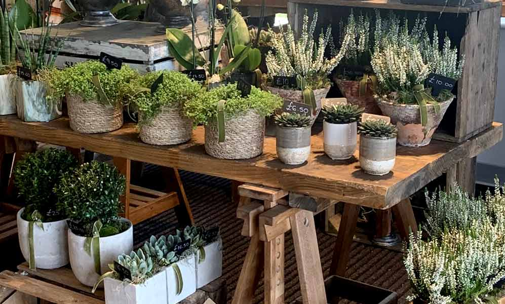 STEMS DESIGN We are delighted that Stems Design are now in our Farm Shop. If you haven't seen their amazing flowers and plants yet, pop in and take a peek!